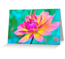 Dahlia Arrayed in Splendor Greeting Card