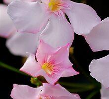 Pink Smiles by DavidROMAN