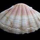 Sea Shell by Francesca Rizzo
