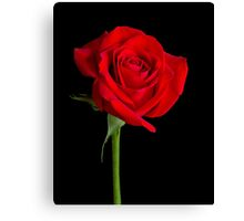 Red Rose Solitaire Canvas Print