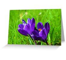 Prelude to Spring; Purple Crocus Greeting Card
