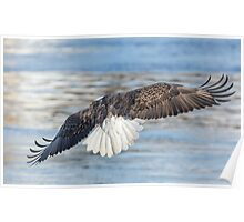 American Bald Eagle 2015-20 Poster