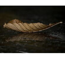 Autumnal Fall Photographic Print