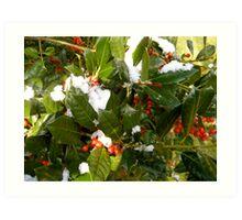 Holly Berries Art Print