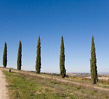 Tuscan Cyprus Trees by Tony Cicero