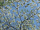 Spring Floral Sky by NatureGreeting Cards ©ccwri