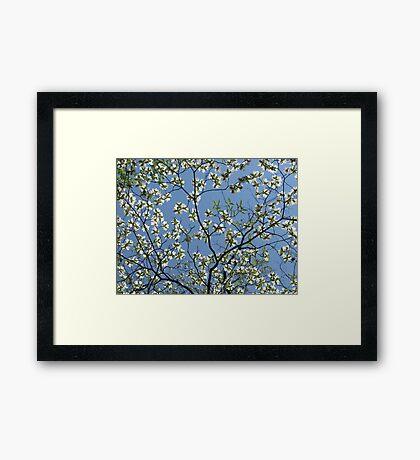 Spring Floral Sky Framed Print