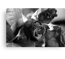 Roses are black Canvas Print