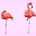 Flamingos     Pink by James  Key