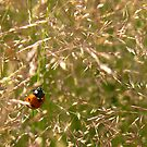 Ladybug - Summer shines #2 by aratma