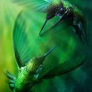 Humming Birds by Cliff Vestergaard