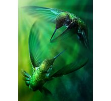 Humming Birds Photographic Print