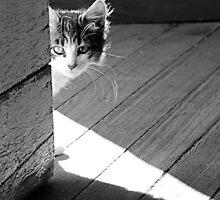 #633    Peeking Around The Corner by MyInnereyeMike
