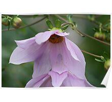 Cherry Blossum Poster