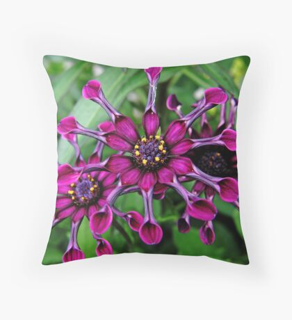 A Trio Of Purple African Daisies....  Throw Pillow