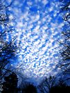 Clouds In The Grips - Orton Series by Tamara Valjean