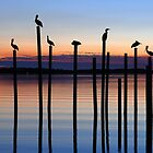 Seven Birds at Dusk by Charlie Sawyer
