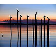 Seven Birds at Dusk Photographic Print