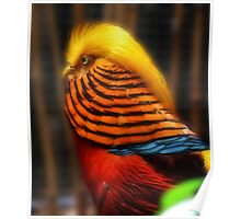 Golden Haired Pheasant Poster