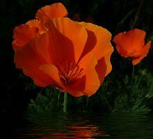 Orange Delight by Julia Mainwaring-Berry