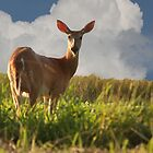 Hello Deer by oneline