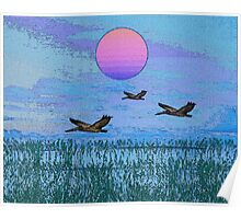 Pelicans in the Morning Poster