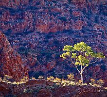 Ghost Gums Of Ormiston Gorge by Steven Pearce
