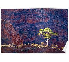 Ghost Gums Of Ormiston Gorge Poster