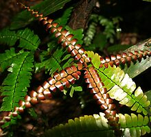 Ferns in the Jungle by Laurel Talabere
