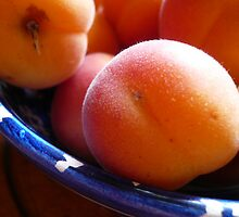 Apricots by lucindadodds