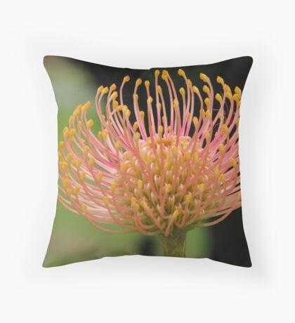 Leucospermum cuneiforme  Throw Pillow