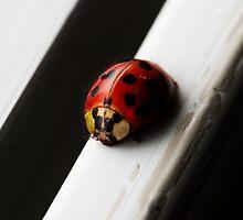 Lady Bug by Areej Obeid