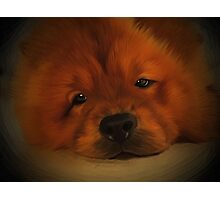 Udon the Chow Chow Photographic Print