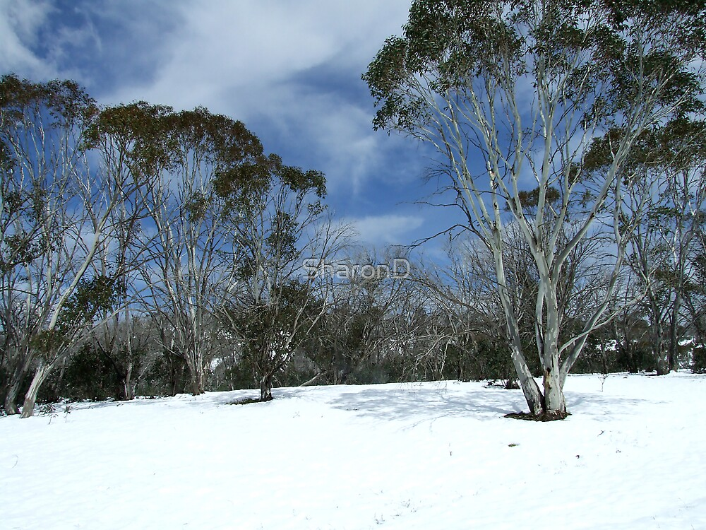 Snow Scene by SharonD