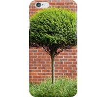 Urban Tree iPhone Case/Skin