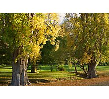 Autumn in Port Arthur, Tasmania Photographic Print
