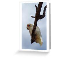 Lone Corella Greeting Card