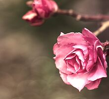 Beauty is a Light in the Heart by Linda Lees