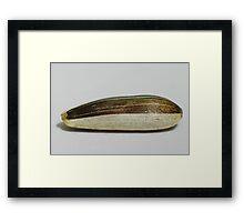 Mystery V - Sunflower seed Framed Print
