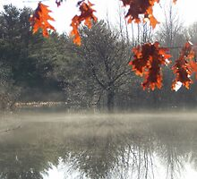 The Fringe of fall by Karen Cook