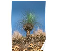 Grass Tree Poster