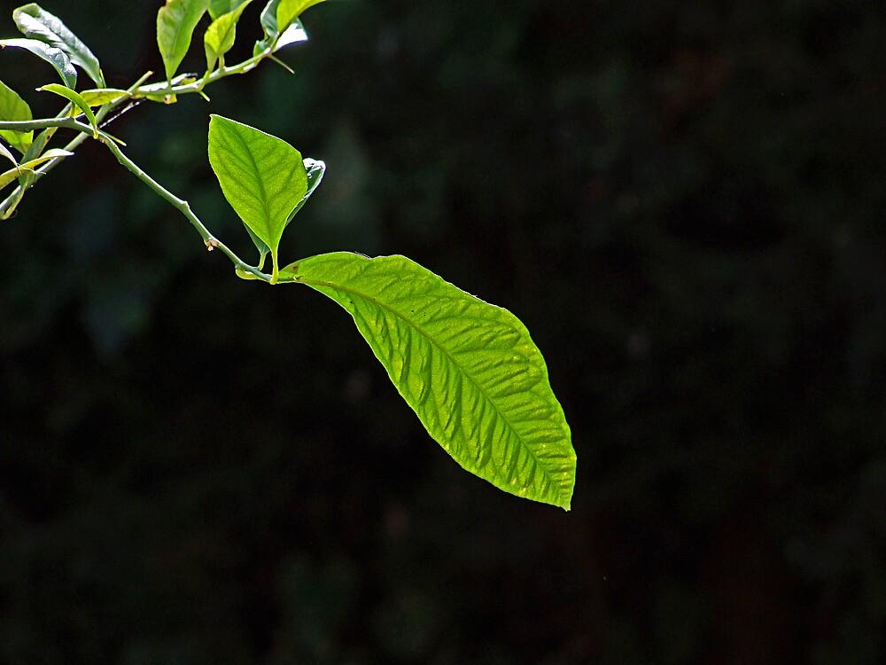 Just green by Maistora