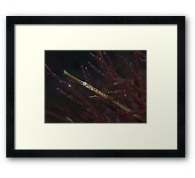 Pipefish. Framed Print