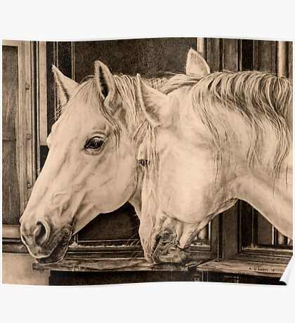Lipizzaners in stables  Poster
