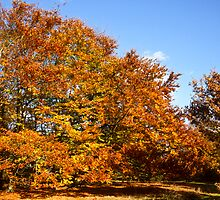 Autumn Colours in Epping forest  by Gary Rayner