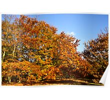 Autumn Colours in Epping forest  Poster