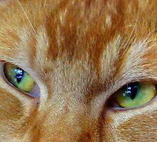Cats Eyes by ienemien