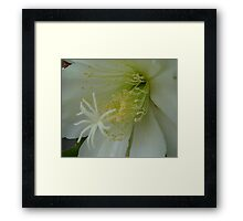 Wonder in White Framed Print