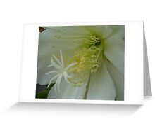 Wonder in White Greeting Card