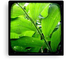 Green - TTV Canvas Print